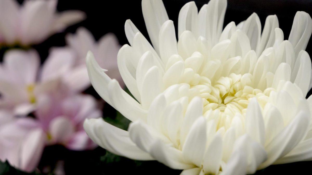 お葬式の供花、誰が出すの?いくらぐらいが相場?