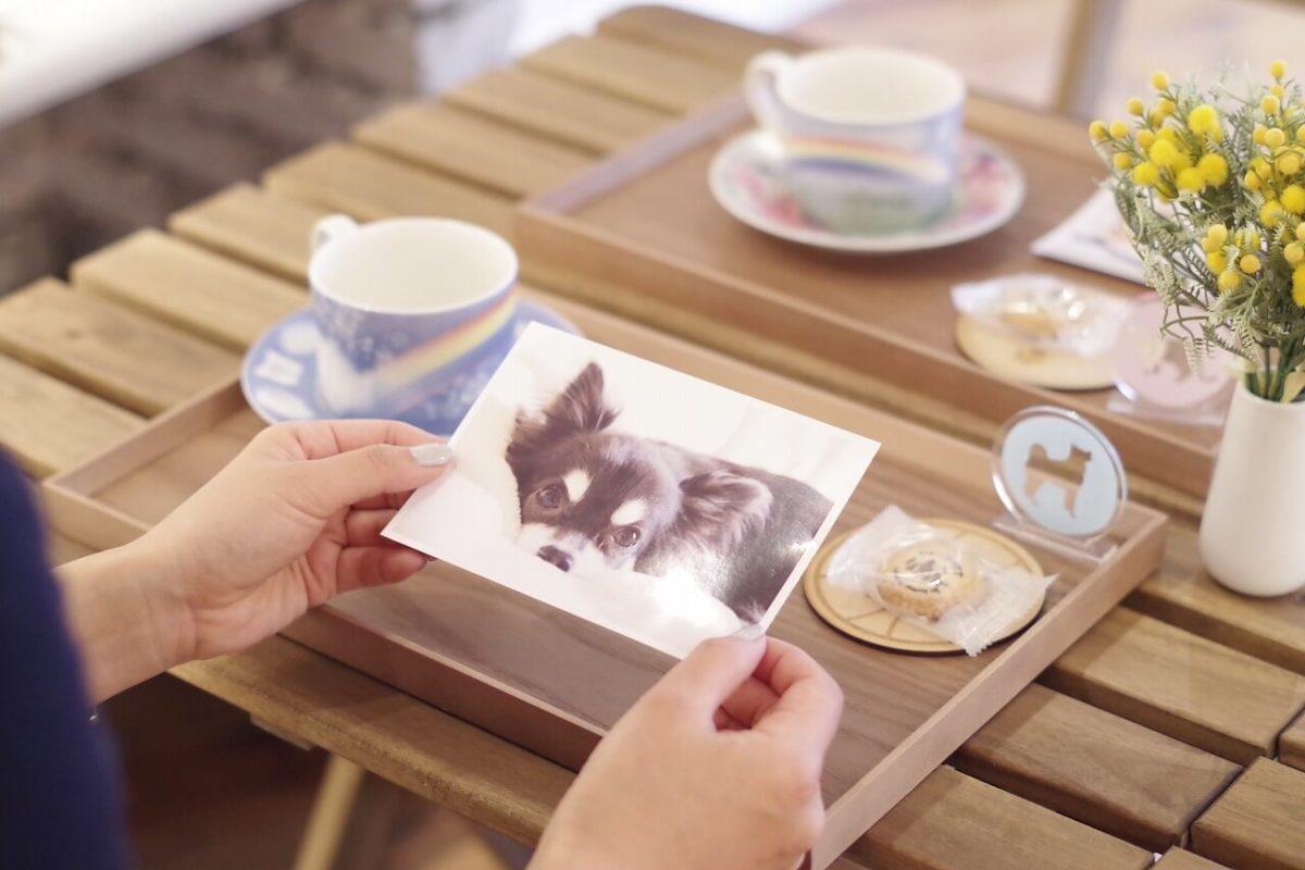 日本唯一!ペットロスカフェが目指す、癒しの提案