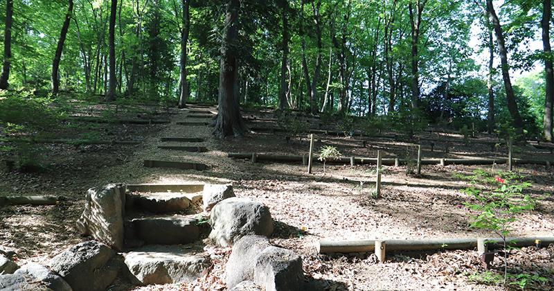 樹木葬・散骨・自然葬のイメージ